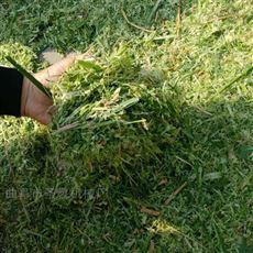 SL ZCJ养牛用自动进料铡草机