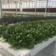 营养液 浮板种植 DFT水培种植床