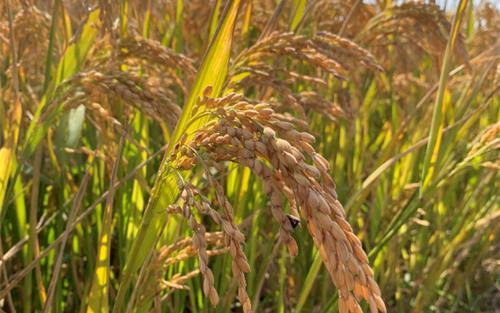 江西省关于2020年第二批省级农机推广鉴定结果的公示