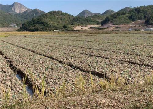 农业农村部部署推进畜禽粪污资源化利用项目
