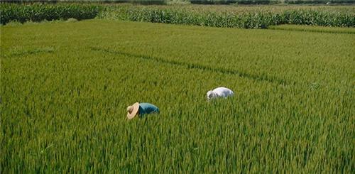 国际资讯—印度马恒达拖拉机6月份销量增长10%