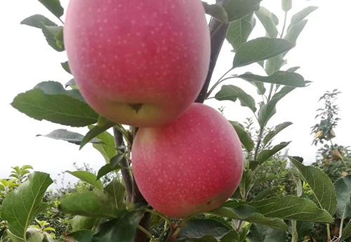 关于认定山东省特色农产品优势区(第三批)的通知