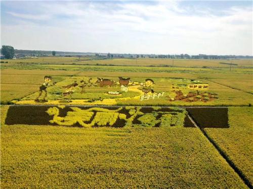 今年的中国农民丰收节怎么过?会有哪些特色活动?