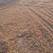 你最关心的问题来了!小麦玉米价格还会继续涨吗?粮食安全有保障吗?