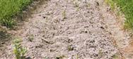 吉林省举办2020年农机深松整地技术培训班