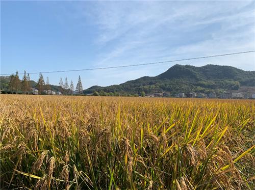 联合国粮农组织总干事屈冬玉向中国亿万农民致以节日祝贺