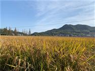 广西关于推进全区中晚稻生产机械化工作的通知